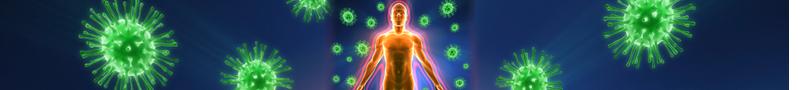 banner-immunsystem1