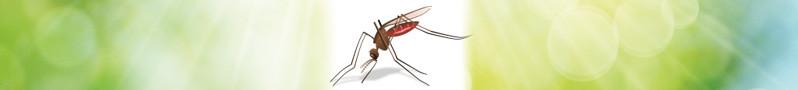 banner-insektenschutz